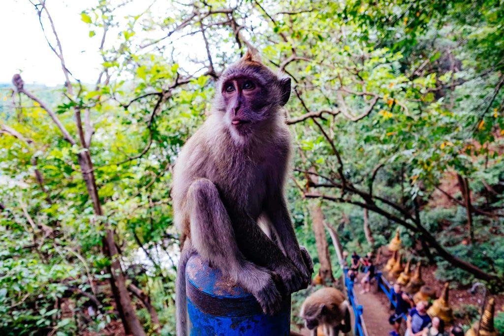 Affe am Wat Tham Suae Krabi Thailand Rundreise